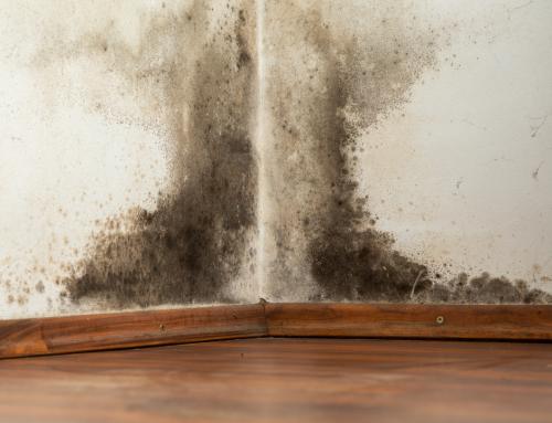 Damp NIHE Properties Exacerbates Respiratory Illness in Tenants Across Northern Ireland
